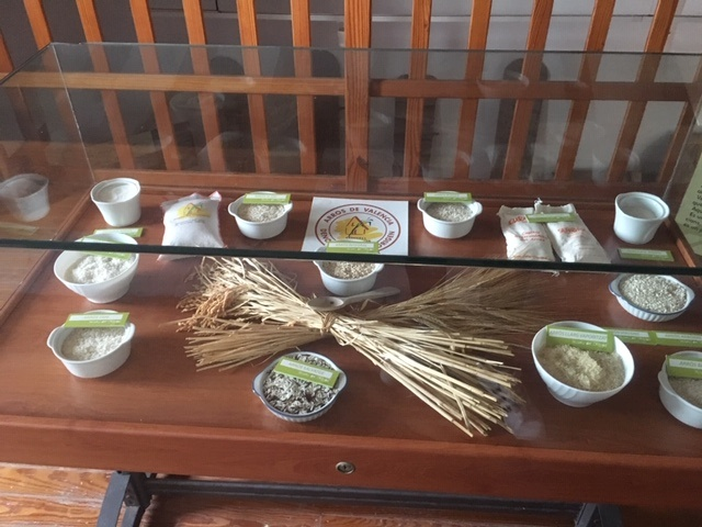 Variedades arroz Museo del arroz