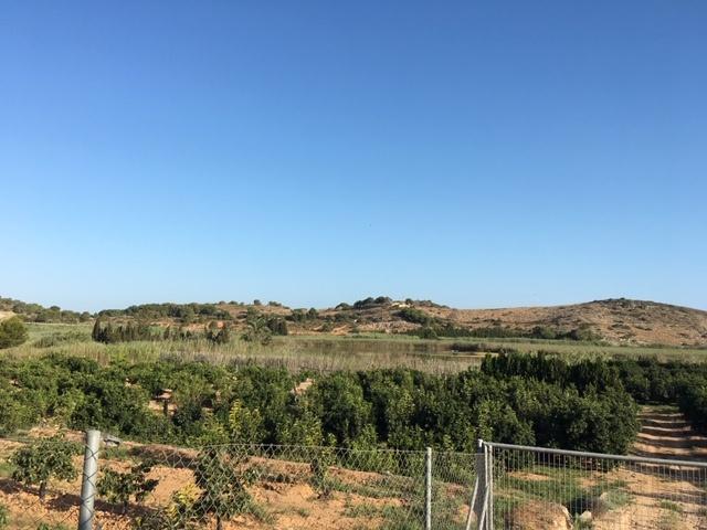 Bassa de Sant Llorenç en Cullera rodeada de cultivos