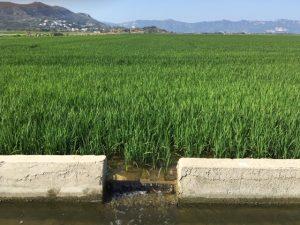 Acequia en los arrozales norte de Cullera
