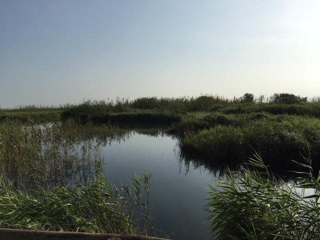 Ullal de Baldovi laguna central
