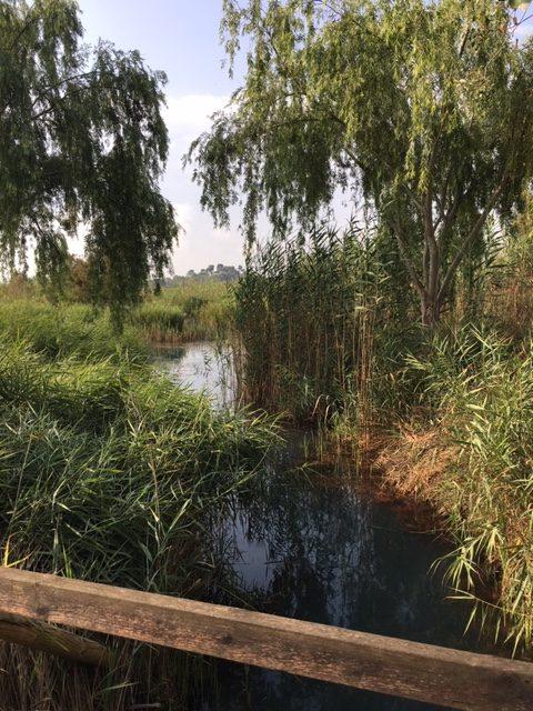 Vegetación arborea en el ullal de Baldovi