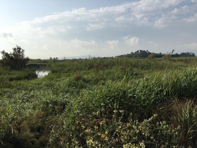 Vegetación en el Ullal de Baldovi